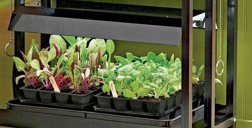 Gardening Under Grow Lights Gardener, Outdoor Grow Lights