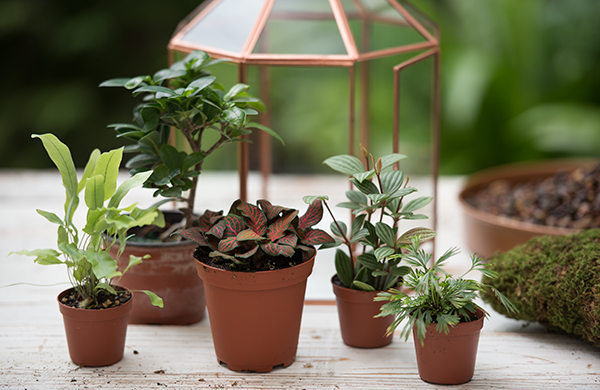 Plants that can be grown in a terrarium