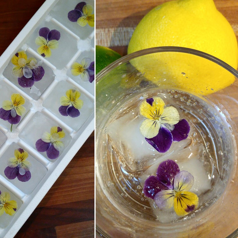 Ice cubes with flowers frozen inside