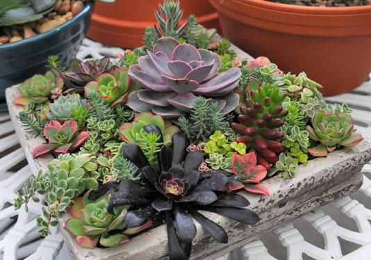 Succulent Planters Idea Book Gardener S Supply
