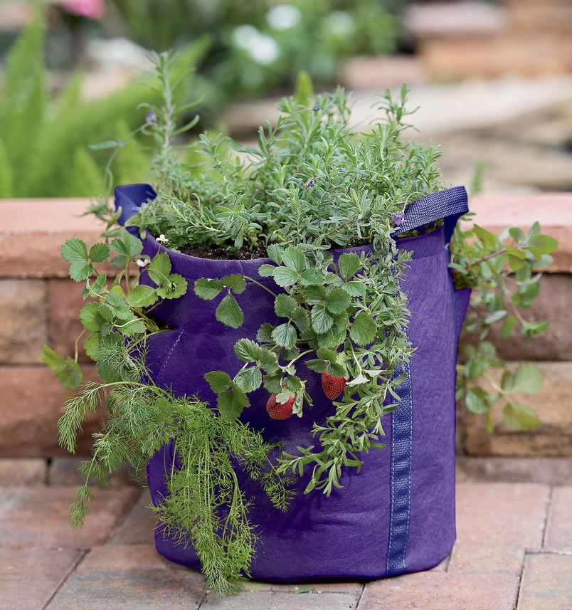 Strawberry and Herb Grow Bag
