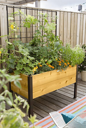 Cedar Planter Box with Trellis