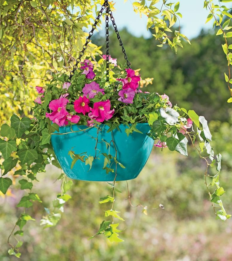 Plant Food Don T Forget To Feed Your, How Often Do You Feed Bedding Plants