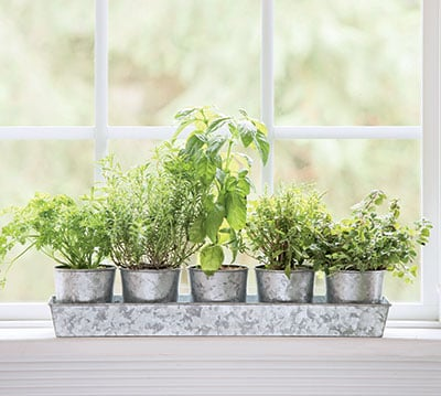 herbs growing on a windowsill