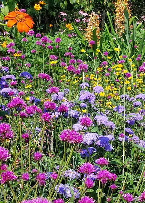 brightly colored flowers in children's garden