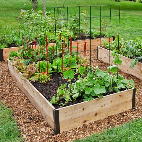 Deep Root Raised Beds