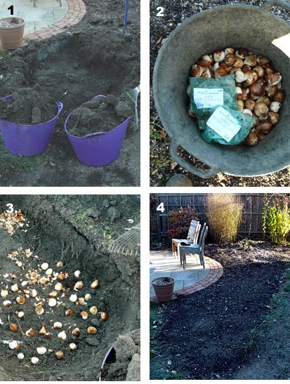 step-by-step trench-style bulb planting