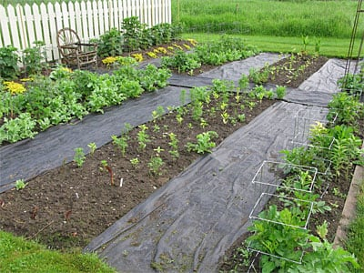 Cutting garden with Pro Weed Mat