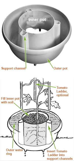 tomato halo diagram