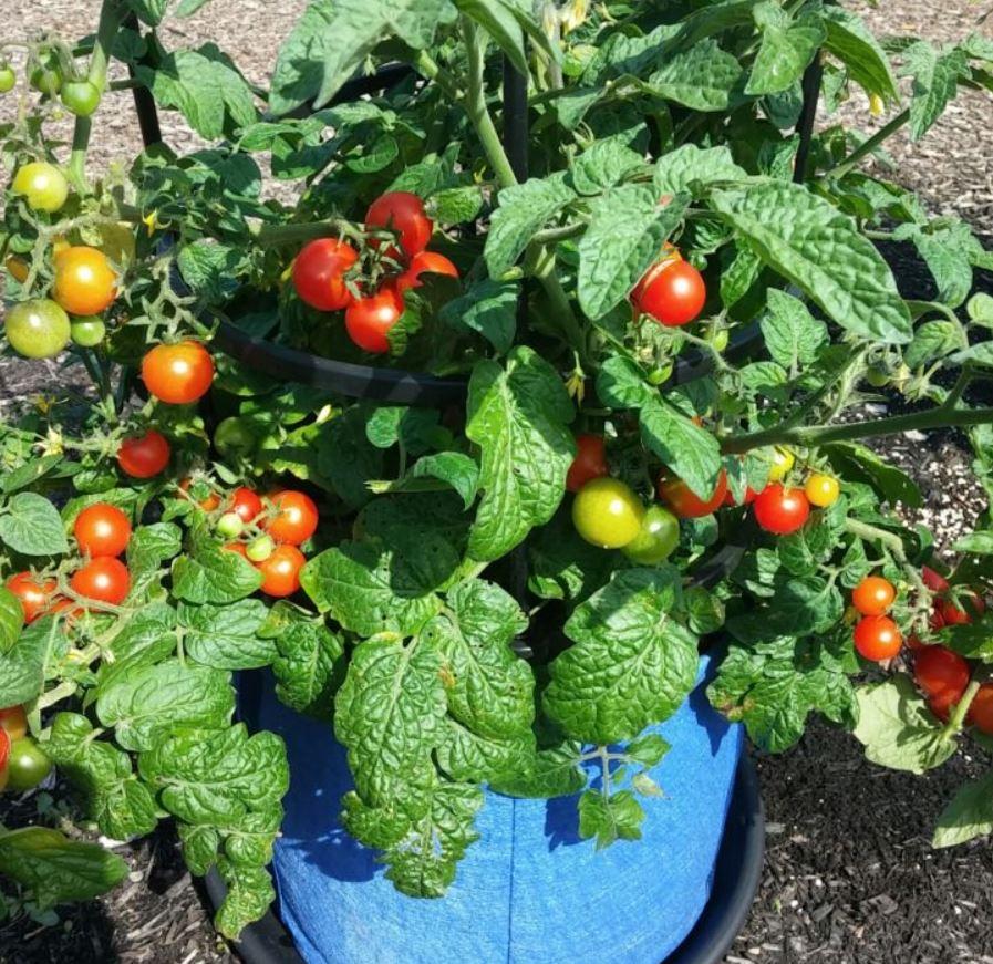 Small Vegetable Garden Ideas Gardener S Supply