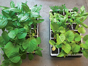 seedlings with and without fertilizer