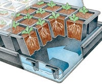 How the Seedstarting Grow Kit works