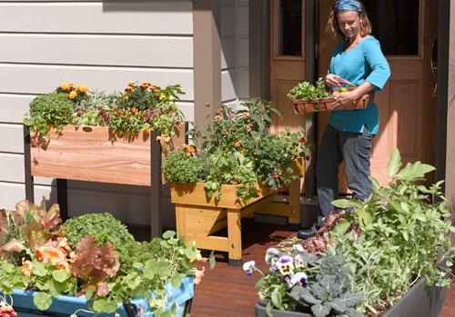 Create A Patio Vegetable Garden, How To Start A Patio Vegetable Garden