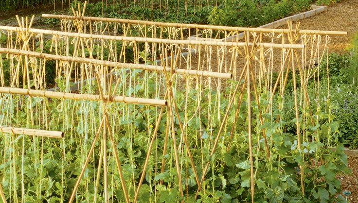 5002-bamboo-structures.jpg