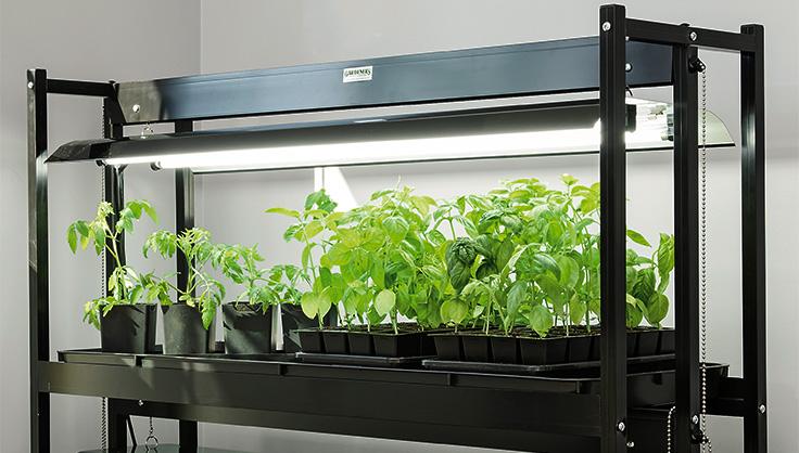 How to Choose an LED Grow Light | Gardener's Supply