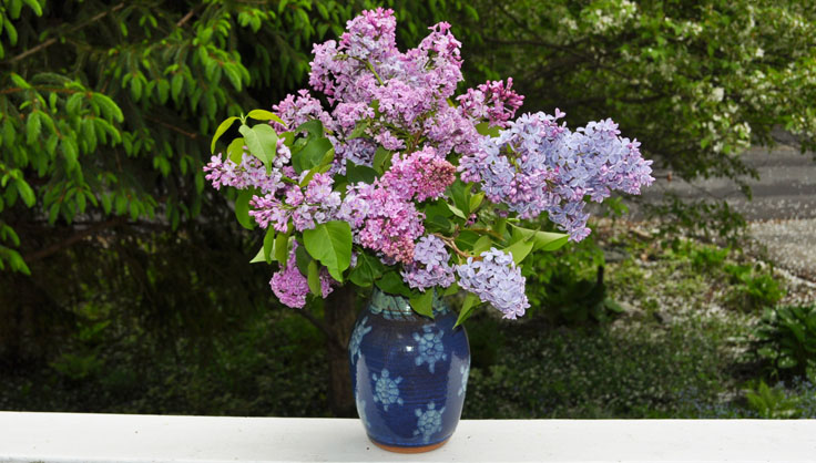 lilac flowers in a vase