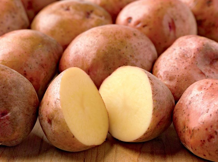 rose gold seed potatoes