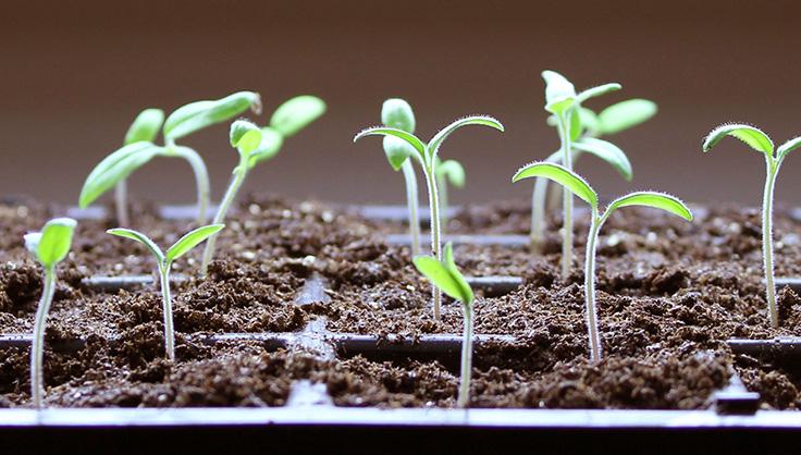 Seed-Starting FAQs - How to Start Seeds | Gardener's Supply