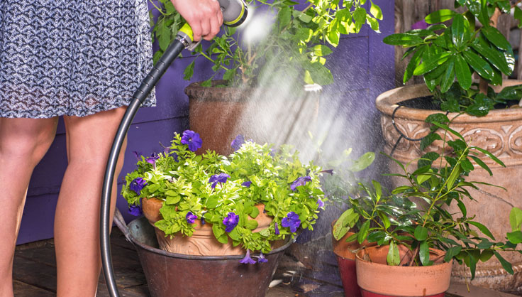 Watering Tips When To Water Gardener, How Often Do Bedding Plants Need Watering