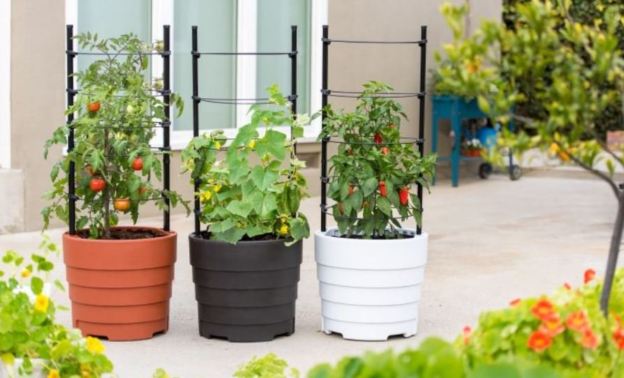 three Gardener?s Victory Self-Watering Planter Gardens growing tomatoes, cucumbers and peppers