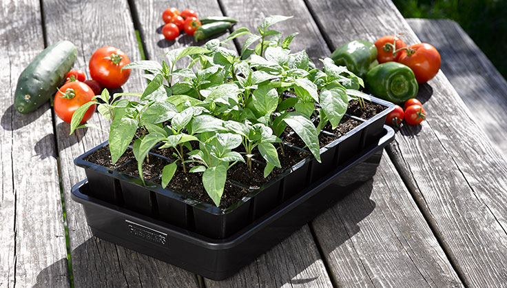 GrowEase Seed Starting Tray with Peppers