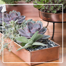 Plant Trays & Saucers