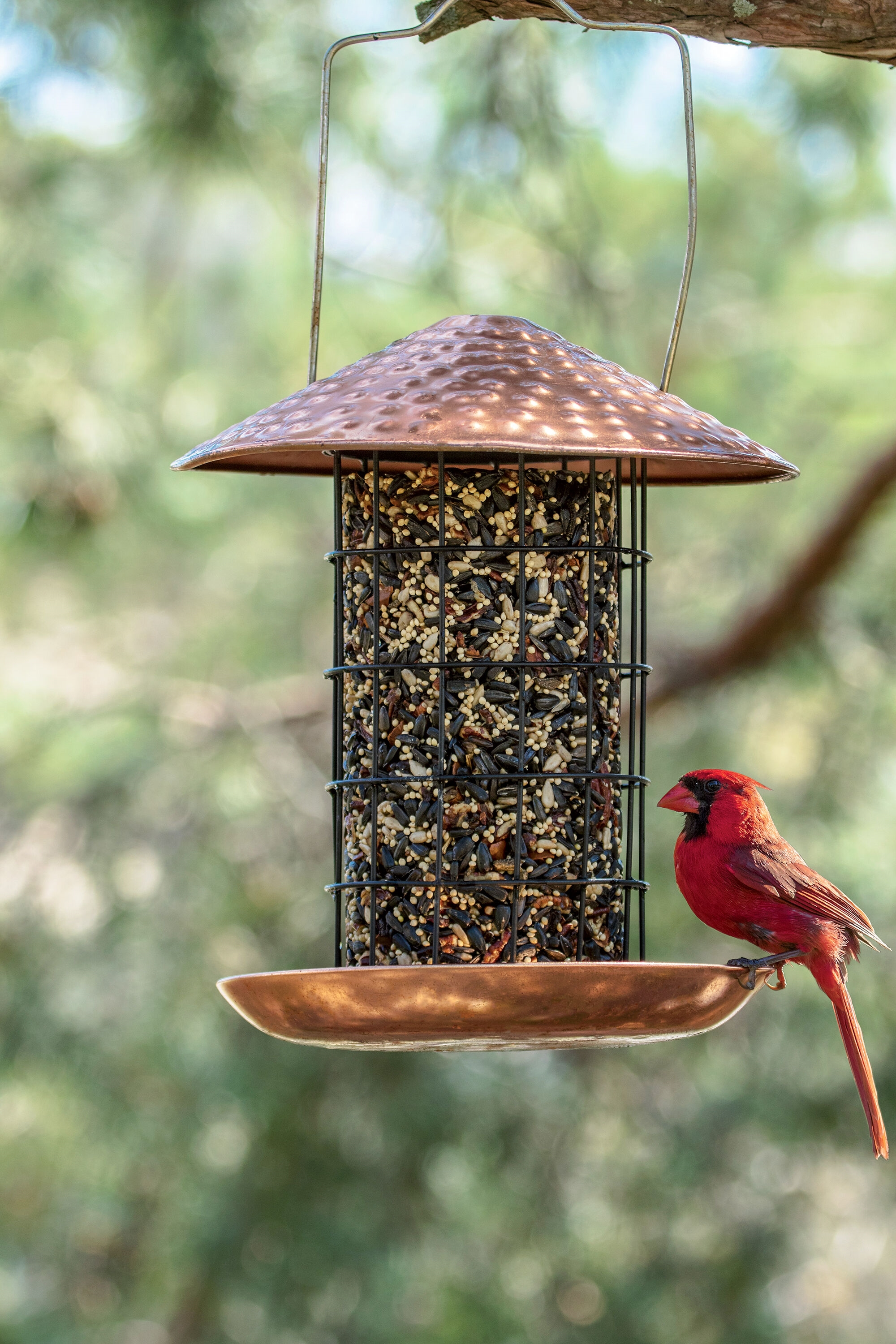 Copper Seed Cylinder Feeder with Bird Seed